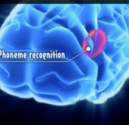 Good Visual Demonstration of Dyslexia and the Brain